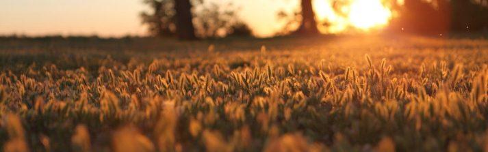 sunset-tree-wheat-field-1920x600